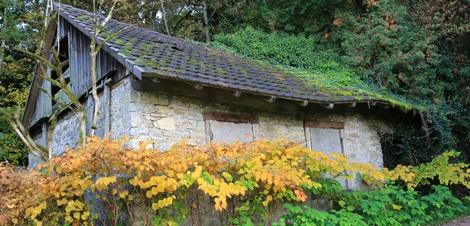 japanese knotweed property