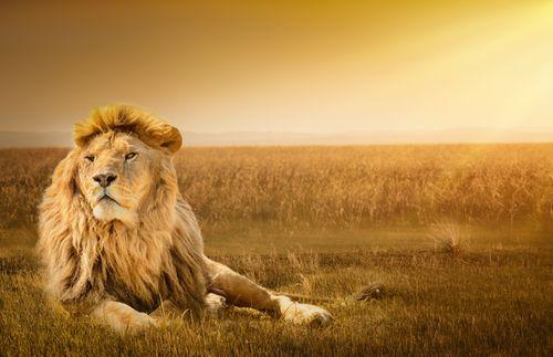 brave-lion-compressor.jpg